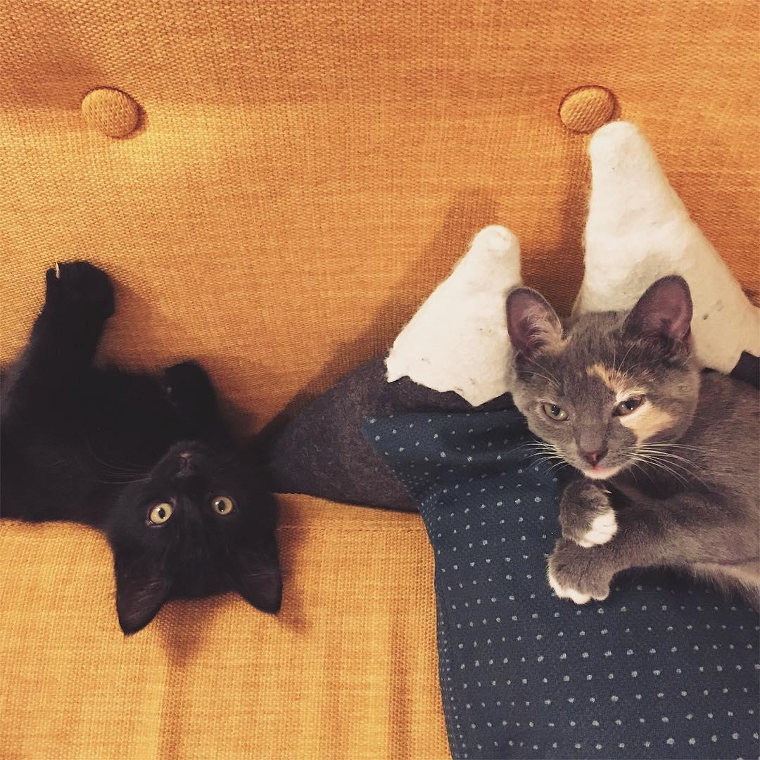 Hello les chatons 3